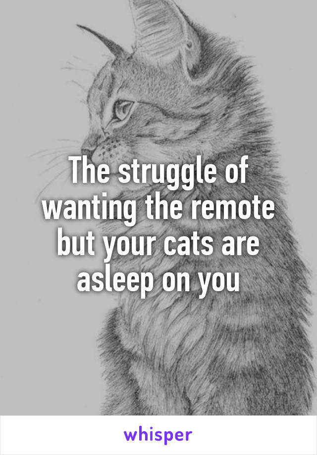 The struggle of wanting the remote but your cats are asleep on you