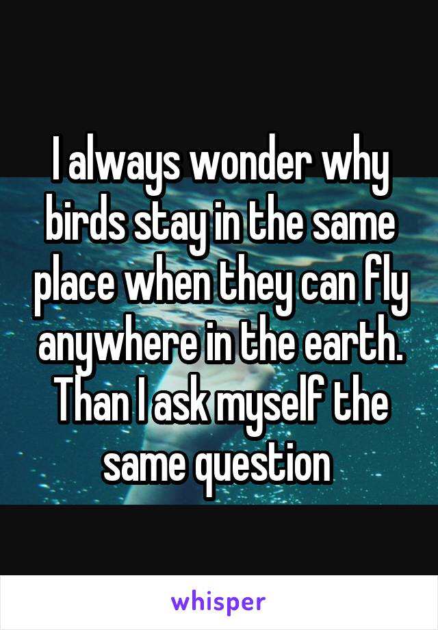 I always wonder why birds stay in the same place when they can fly anywhere in the earth. Than I ask myself the same question
