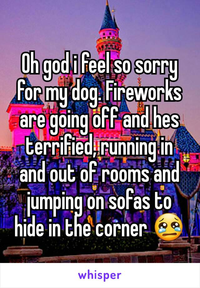 Oh god i feel so sorry for my dog. Fireworks are going off and hes terrified, running in and out of rooms and jumping on sofas to hide in the corner 😢