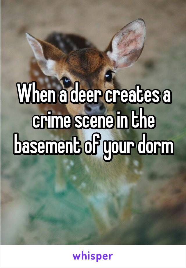 When a deer creates a crime scene in the basement of your dorm