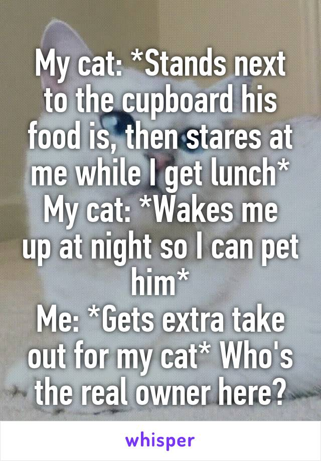 My cat: *Stands next to the cupboard his food is, then stares at me while I get lunch* My cat: *Wakes me up at night so I can pet him* Me: *Gets extra take out for my cat* Who's the real owner here?