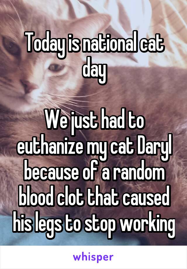 Today is national cat day  We just had to euthanize my cat Daryl because of a random blood clot that caused his legs to stop working