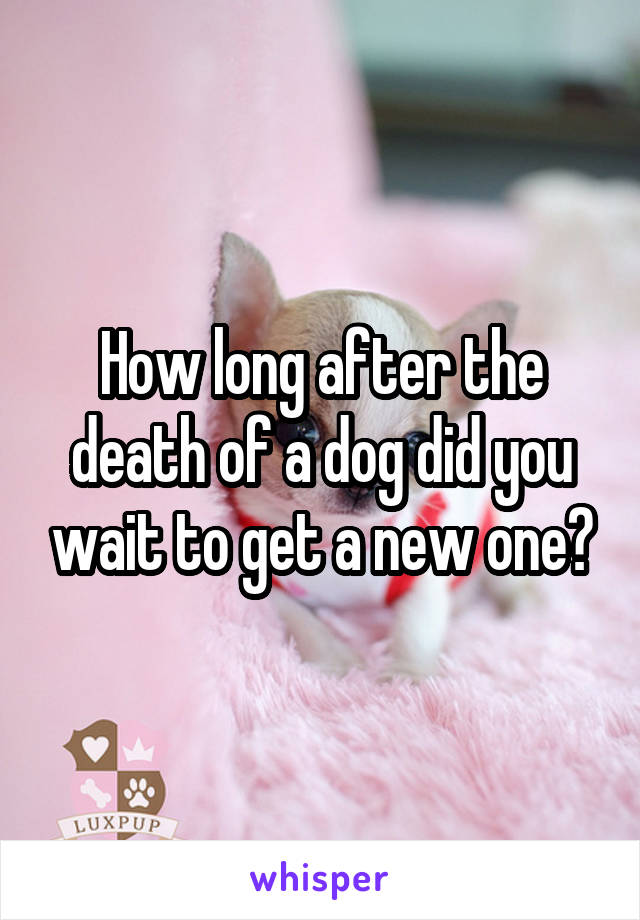 How long after the death of a dog did you wait to get a new one?
