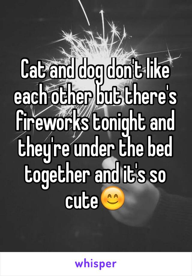 Cat and dog don't like each other but there's fireworks tonight and they're under the bed together and it's so cute😊