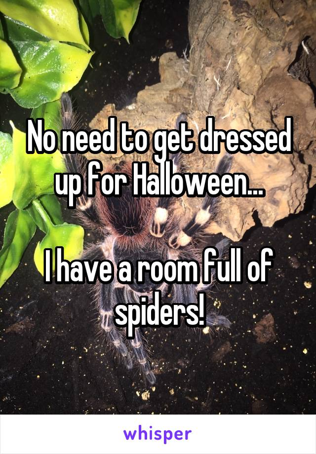 No need to get dressed up for Halloween...  I have a room full of spiders!