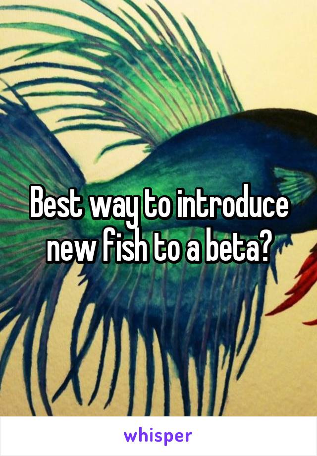Best way to introduce new fish to a beta?