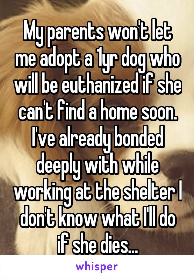 My parents won't let me adopt a 1yr dog who will be euthanized if she can't find a home soon. I've already bonded deeply with while working at the shelter I don't know what I'll do if she dies...