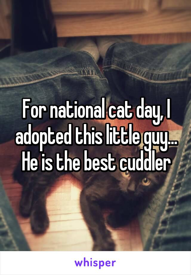 For national cat day, I adopted this little guy... He is the best cuddler