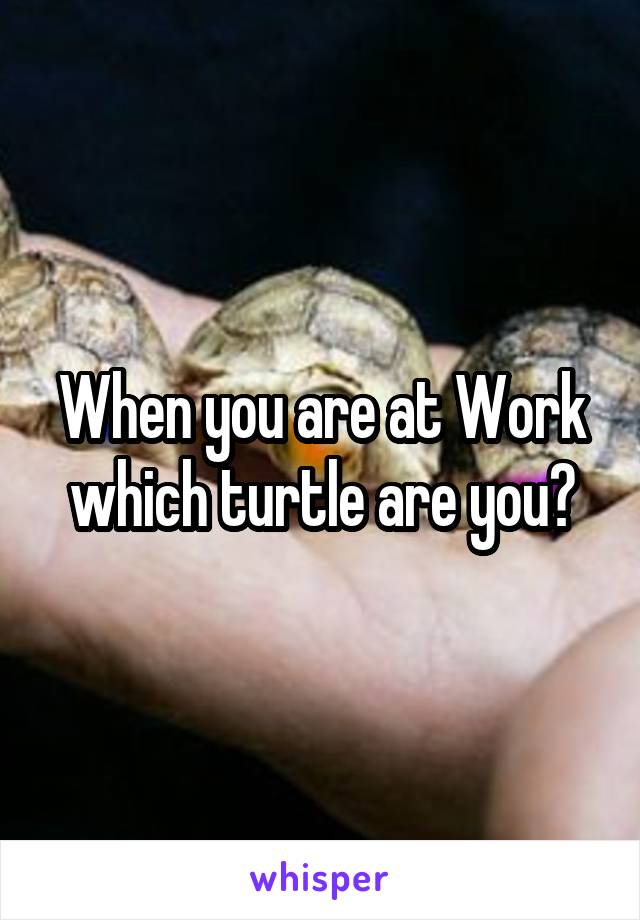 When you are at Work which turtle are you?
