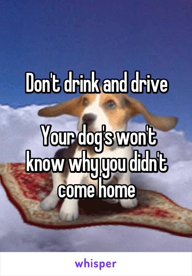 Don't drink and drive   Your dog's won't know why you didn't come home