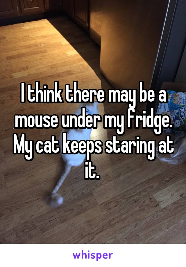 I think there may be a mouse under my fridge. My cat keeps staring at it.