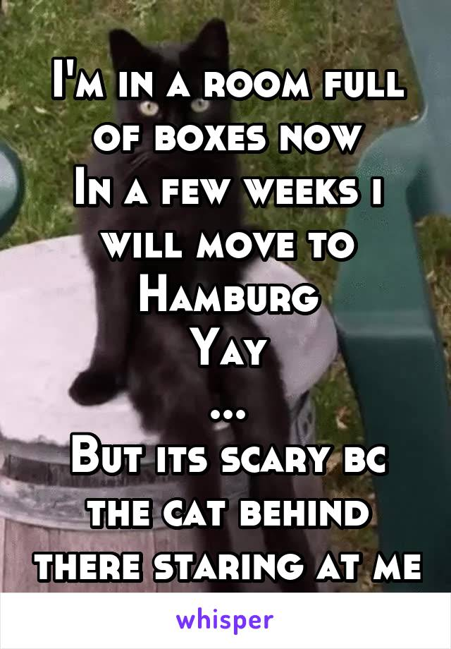 I'm in a room full of boxes now In a few weeks i will move to Hamburg Yay ... But its scary bc the cat behind there staring at me