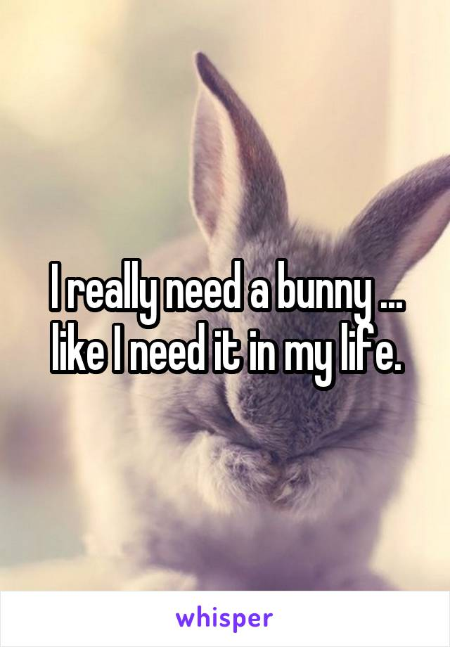 I really need a bunny ... like I need it in my life.