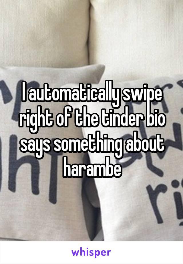 I automatically swipe right of the tinder bio says something about harambe