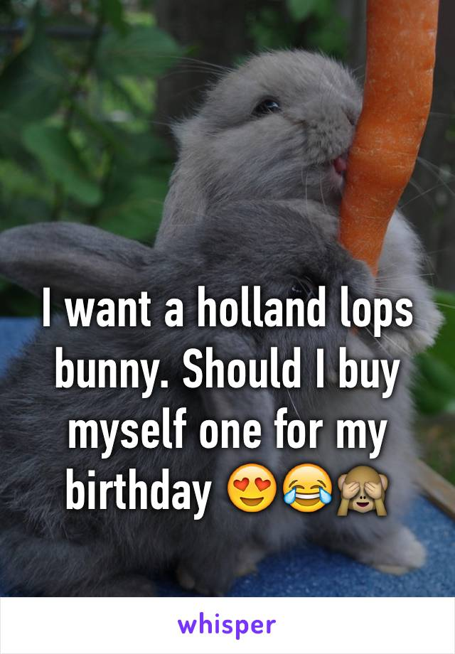 I want a holland lops bunny. Should I buy myself one for my birthday 😍😂🙈
