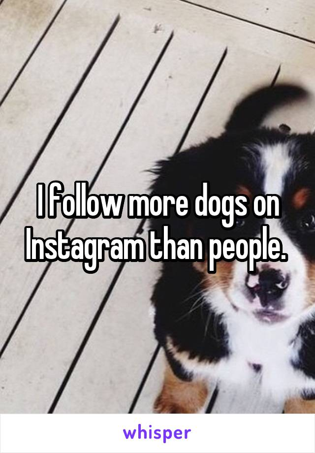 I follow more dogs on Instagram than people.