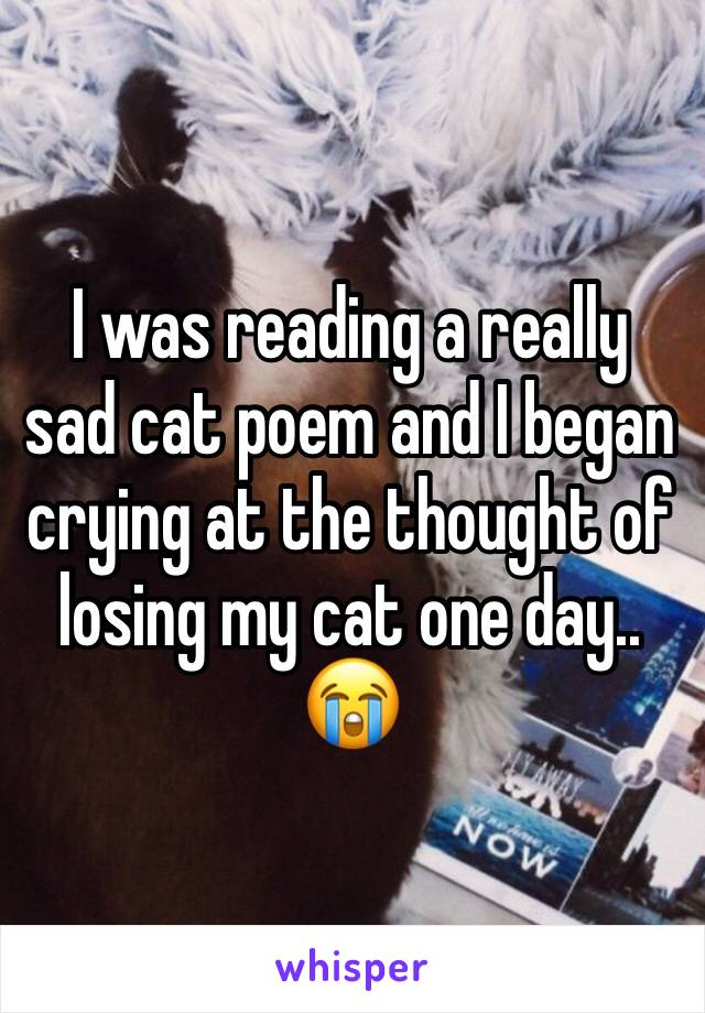 I was reading a really sad cat poem and I began crying at the thought of losing my cat one day.. 😭