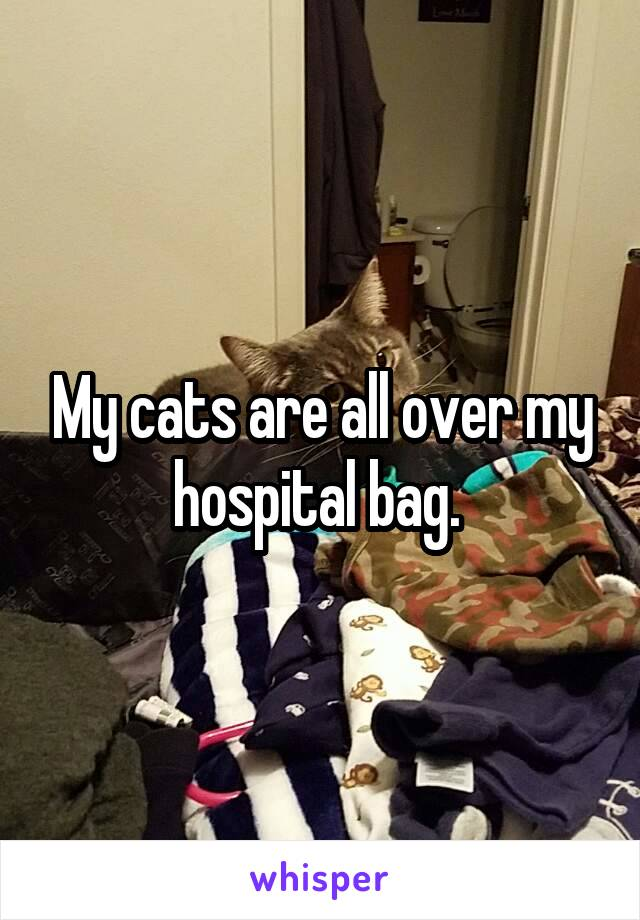 My cats are all over my hospital bag.