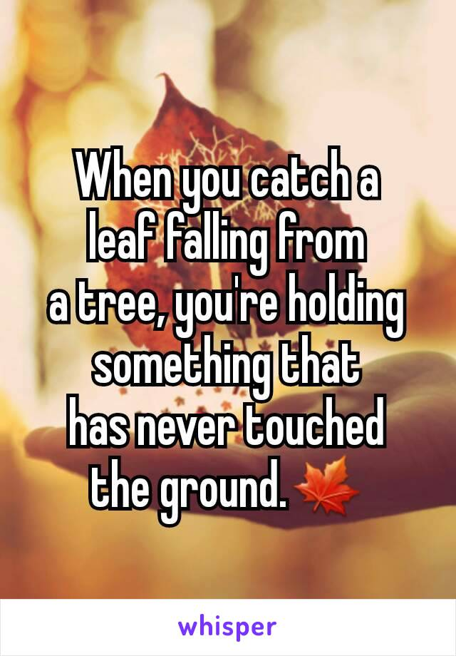 When you catch a leaf falling from a tree, you're holding something that has never touched the ground.🍁