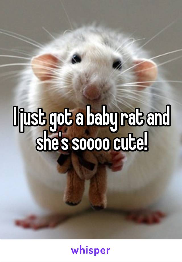I just got a baby rat and she's soooo cute!
