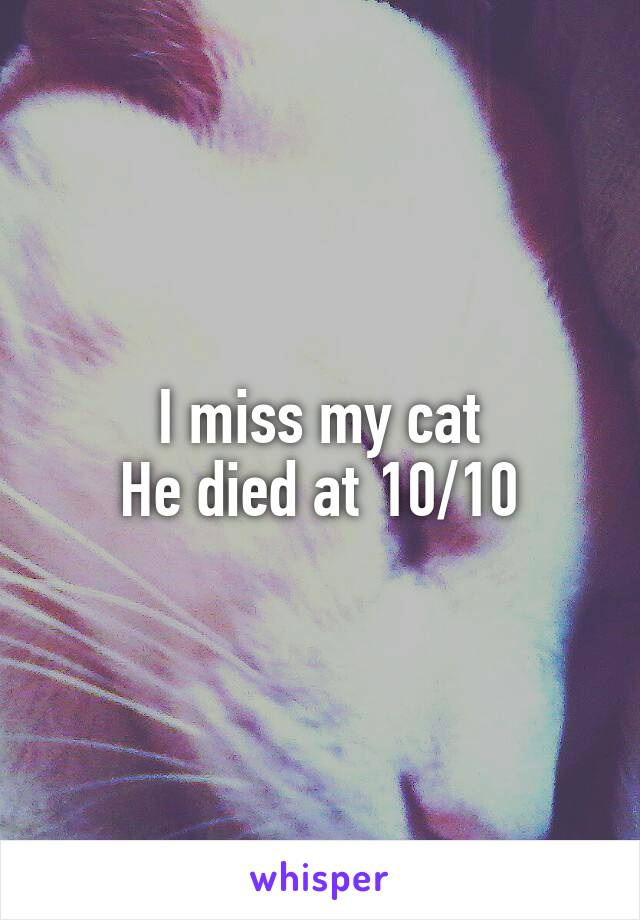 I miss my cat He died at 10/10
