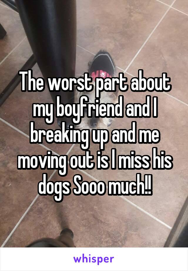 The worst part about my boyfriend and I breaking up and me moving out is I miss his dogs Sooo much!!