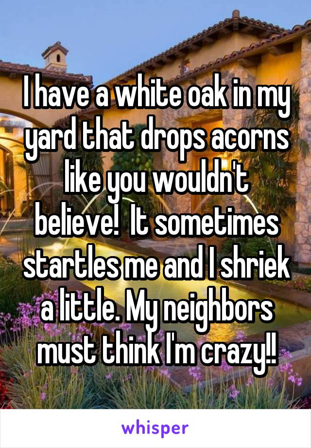 I have a white oak in my yard that drops acorns like you wouldn't believe!  It sometimes startles me and I shriek a little. My neighbors must think I'm crazy!!