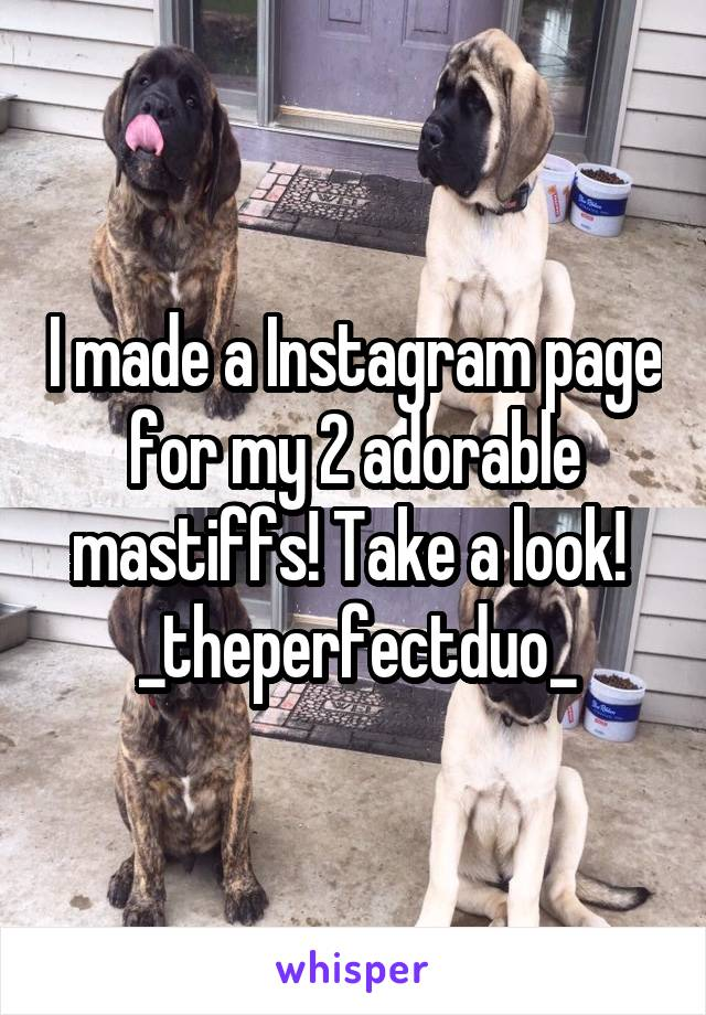 I made a Instagram page for my 2 adorable mastiffs! Take a look!  _theperfectduo_