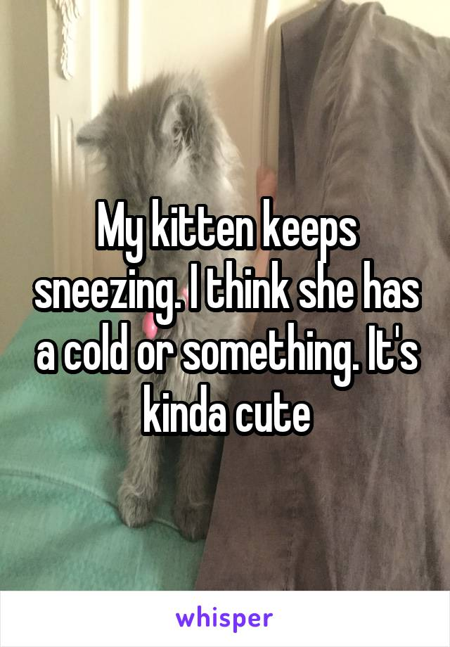 My kitten keeps sneezing. I think she has a cold or something. It's kinda cute