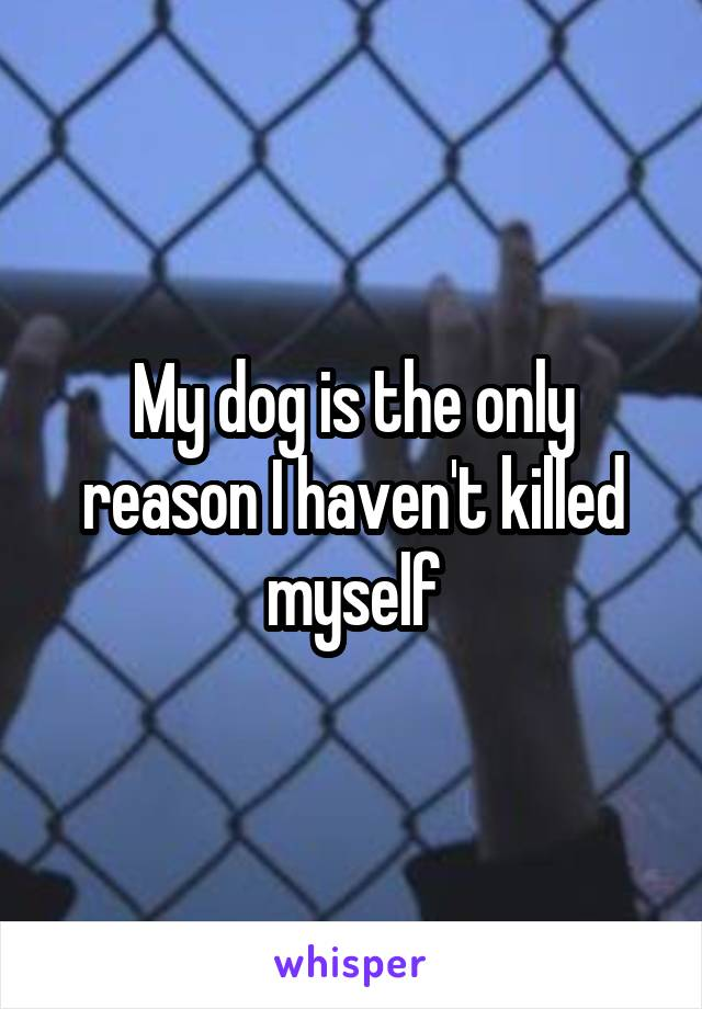 My dog is the only reason I haven't killed myself