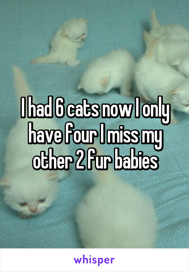 I had 6 cats now I only have four I miss my other 2 fur babies