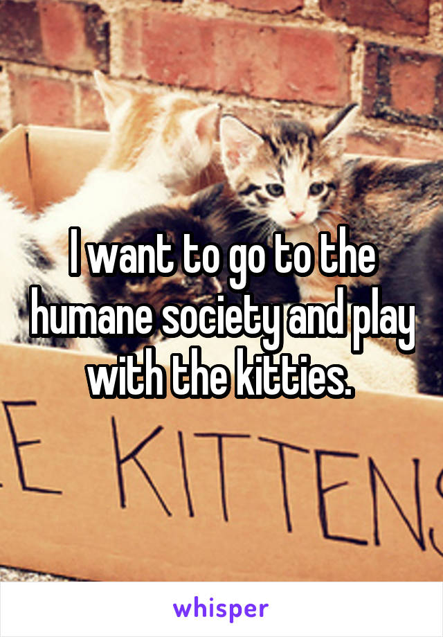 I want to go to the humane society and play with the kitties.