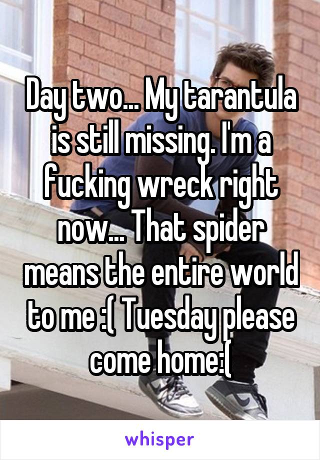 Day two... My tarantula is still missing. I'm a fucking wreck right now... That spider means the entire world to me :( Tuesday please come home:(