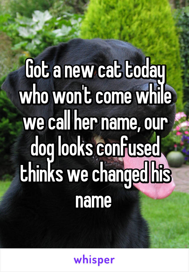 Got a new cat today who won't come while we call her name, our dog looks confused thinks we changed his name