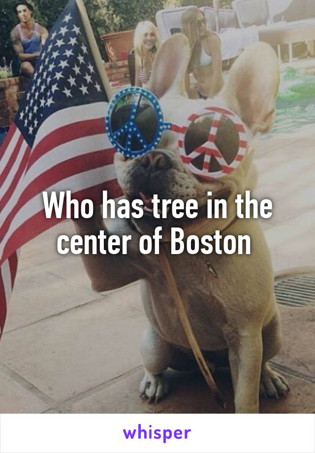 Who has tree in the center of Boston