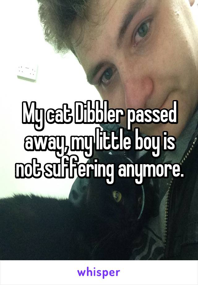 My cat Dibbler passed away, my little boy is not suffering anymore.
