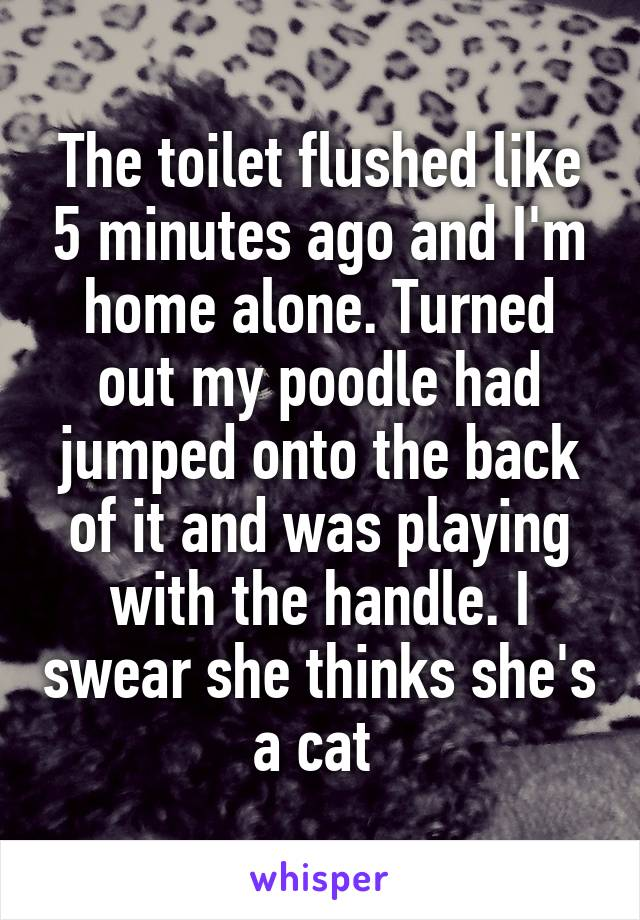 The toilet flushed like 5 minutes ago and I'm home alone. Turned out my poodle had jumped onto the back of it and was playing with the handle. I swear she thinks she's a cat