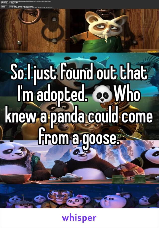 So I just found out that I'm adopted. 🐼Who knew a panda could come from a goose.