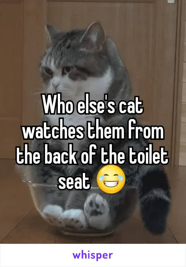 Who else's cat watches them from the back of the toilet seat 😂