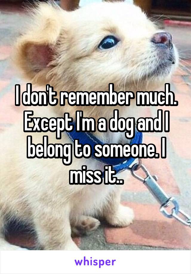 I don't remember much. Except I'm a dog and I belong to someone. I miss it..