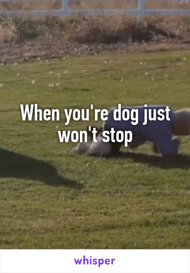 When you're dog just won't stop