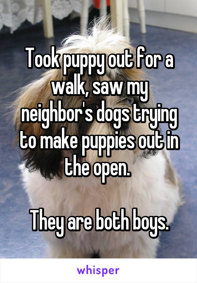 Took puppy out for a walk, saw my neighbor's dogs trying to make puppies out in the open.   They are both boys.