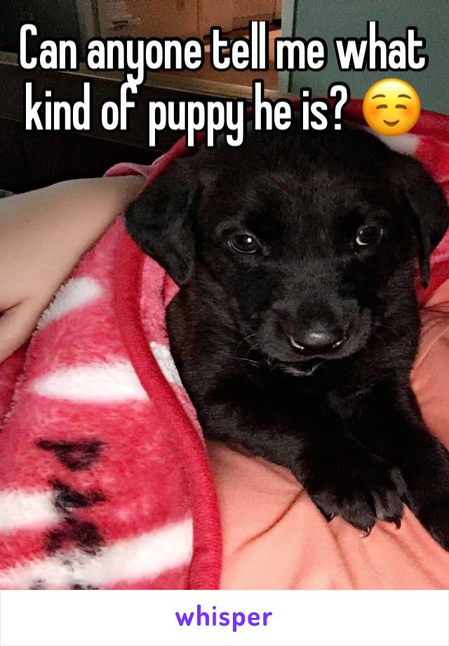 Can anyone tell me what kind of puppy he is? ☺️