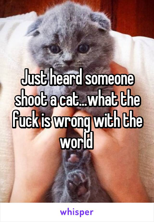 Just heard someone shoot a cat...what the fuck is wrong with the world