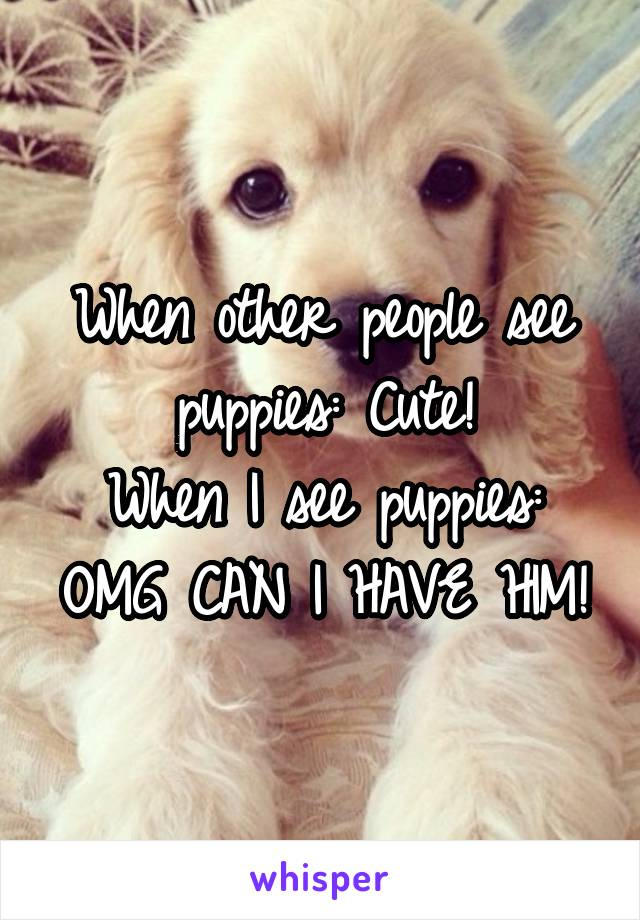 When other people see puppies: Cute! When I see puppies: OMG CAN I HAVE HIM!