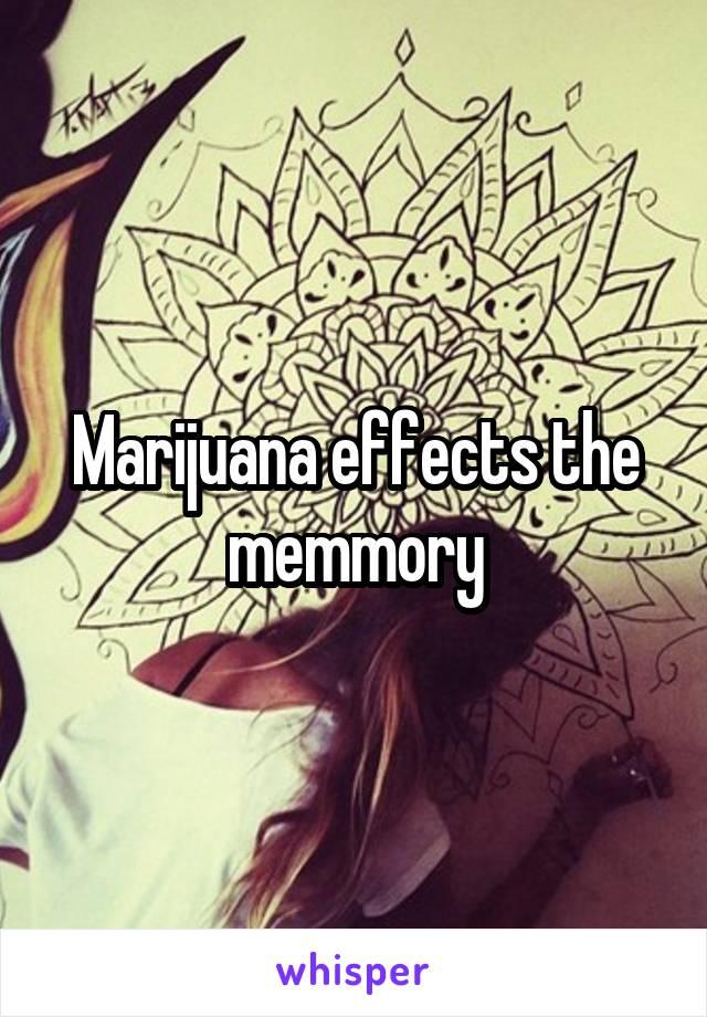 Marijuana effects the memmory