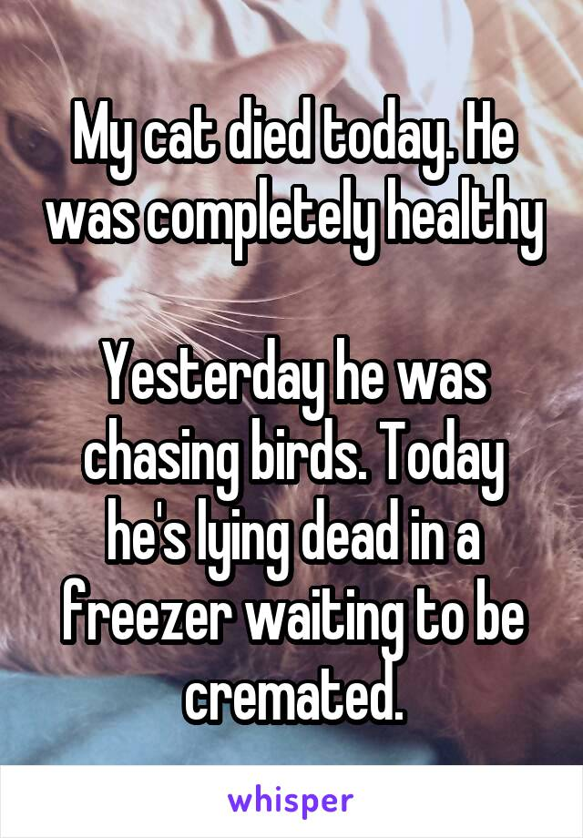 My cat died today. He was completely healthy  Yesterday he was chasing birds. Today he's lying dead in a freezer waiting to be cremated.