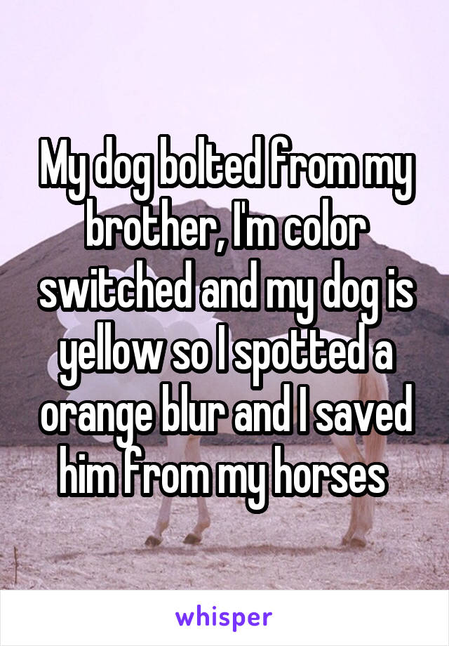 My dog bolted from my brother, I'm color switched and my dog is yellow so I spotted a orange blur and I saved him from my horses