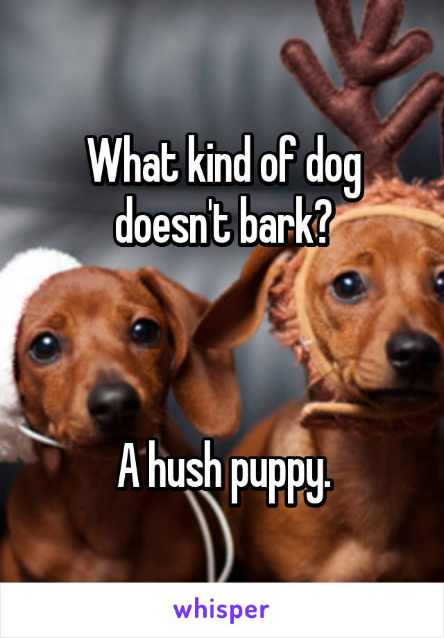 What kind of dog doesn't bark?    A hush puppy.