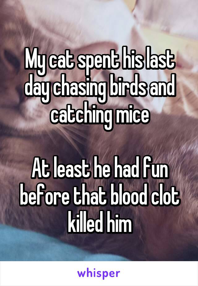 My cat spent his last day chasing birds and catching mice  At least he had fun before that blood clot killed him